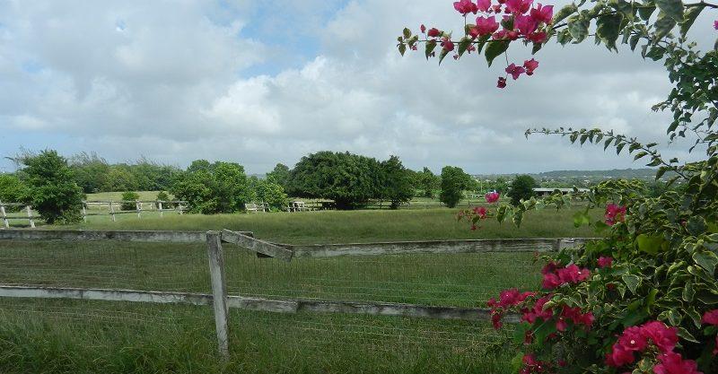 Neils plantation