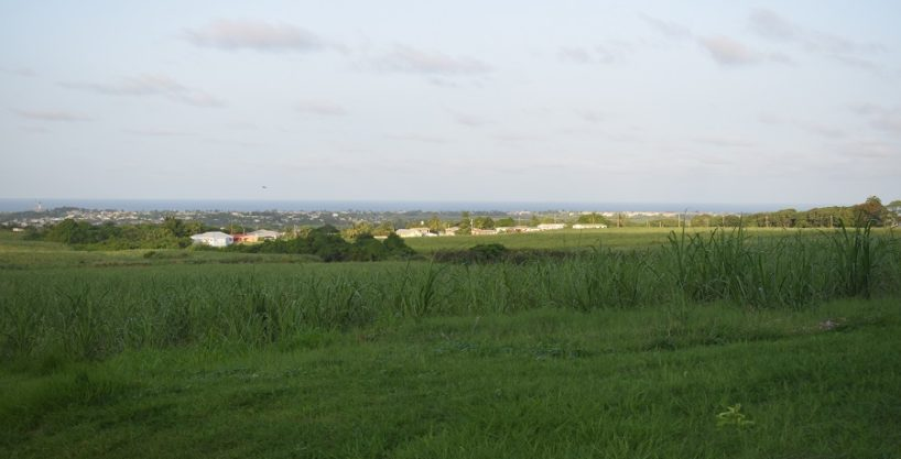 Mount View